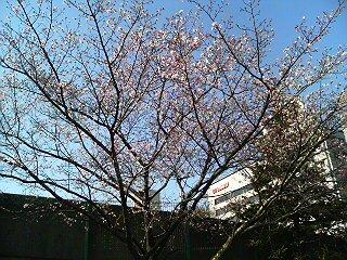 もうすぐ春ですね…!?
